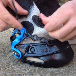 Ajustando las botas Explora al casco del caballo