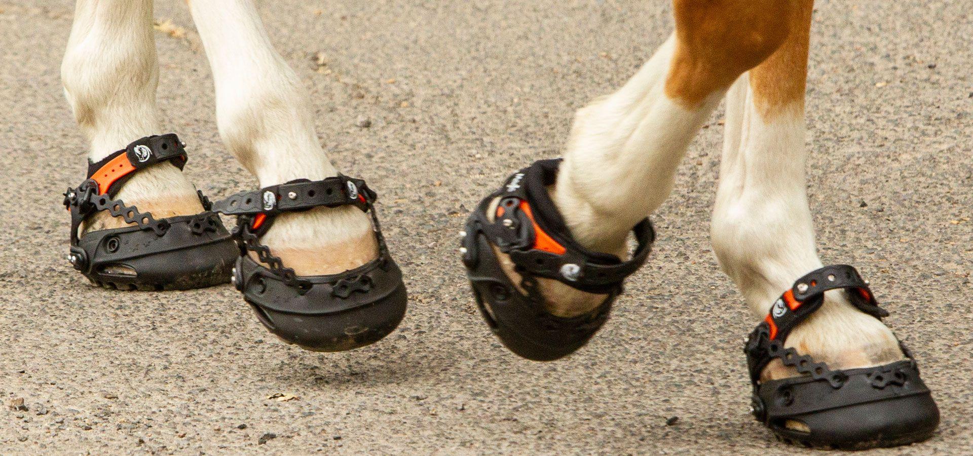 Bota para caballos Explora Magic, nuevo modelo con calcetin de neopreno en acción