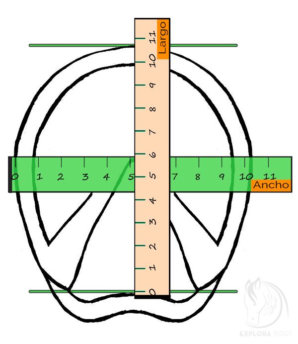 Referencias para medir los cascos